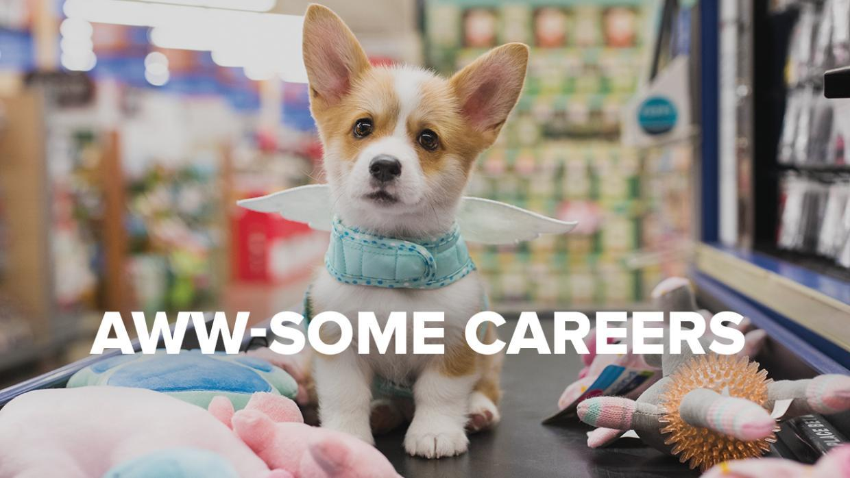 Petsmart Mission Benefits And Work Culture Indeedcom