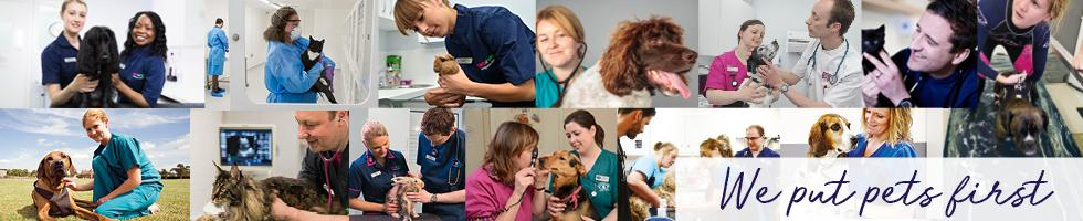Working at Vets4Pets: 86 Reviews | Indeed co uk