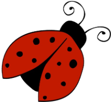 Curious Ladybugs Learning Centre