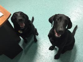Masons Mongrels Dog Training Kennels Kennel Assistant