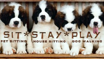 Pet Sitter Resume Wording  babysitter application template     TeamTracTemplate s