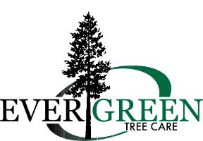 Evergreen Tree Care