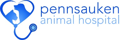 Veterinary Technician Jobs Employment In Philadelphia Pa Indeed Com