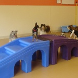 Ruff Housing photo: Great indoor playrooms, too!