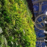Living wall inside the Amazon Spheres