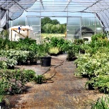Foothills Nurseries photo: