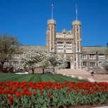 Washington University in St. Louis photo: Tulips outside of Brookings Hall