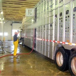 washing the inside of a cattle trailer :(