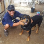 Rottweiler, I did care this dog,