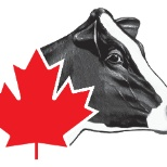 Holstein Canada photo: Holstein Canada's logo is recognized internationally as a leader in improving the Holstein breed.