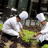 Chefs handpicking homegrown vegetables