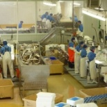 Silver Bay Seafoods photo: seafood plant