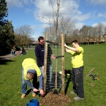 Tree planting in the community as part of our volunteer day.