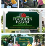 Volunteering at Forgotten Harvest Farms