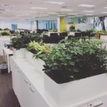 Going green in the Singapore office