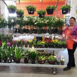 The Home Depot photo: Displaying the new plants we jus got
