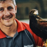 Joe, our trained falconer with one of our special hawks.