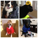 G&K Services photo: Even G&K employees' pets like our products!