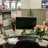 photo of Air Products, My Birthday Roses form my Lovely Coworkers