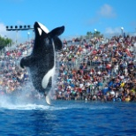 SeaWorld photo: Shamu stadium