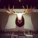 Abercrombie & Fitch moose