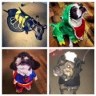 Our office is dog friendly...happy halloween from the Verndale pups!
