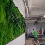 ICF photo: Living wall in the cafeteria in our Richmond, VA office