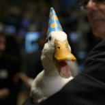 Aflac photo: