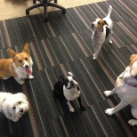 Rover.com photo: The office dogs @ Rover HQ are always camera-ready when there are treats nearby...