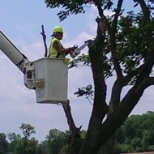 Townsend Tree Service Careers And Employment Indeed Com