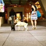 Nestle Purina photo: The ability to have your pets at work is one of the many benefits of working at Purina