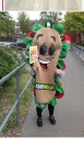 The Subway costume.
