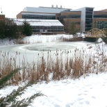 A frozen pond on the ODU campus  - February, 2015.