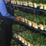 Walmart photo: Bonnie Veggies and Herbs - new delivery