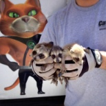 Baby raccoons removed from a home