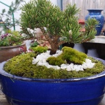 GreenScape photo: Simple BONSAI