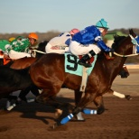 REMINGTON PARK photo: 2015 Quarter Horse