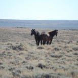 State of Wyoming photo: Wyoming Wild Horses