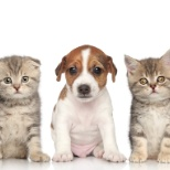 VetStrategy Inc photo: Caring for your family pet!
